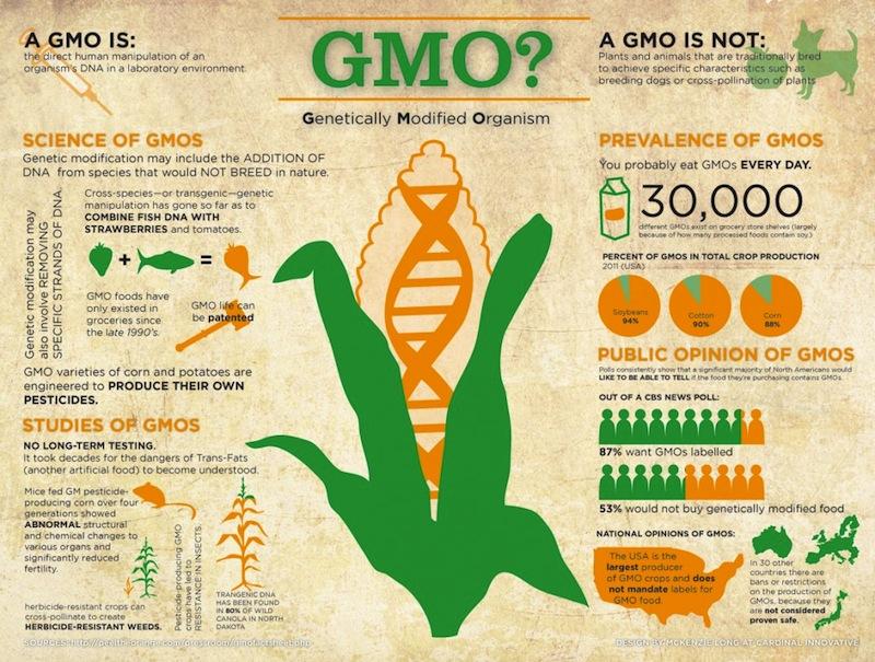 11. Mi a GMO?