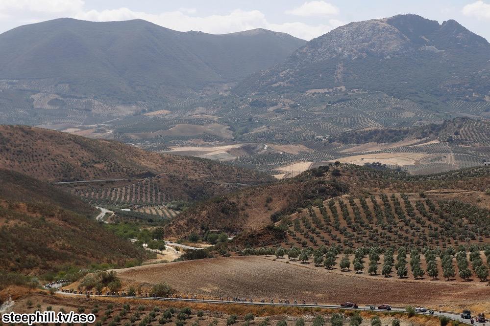 Ligetek közt kígyózó karaván a Vuelta egyik tavalyi szakaszán Andalúziában